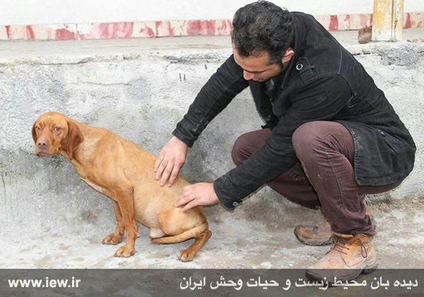 بازداشت عامل سگ آزاری گلستان و درخواست برای اشد مجازات (تصاویر)