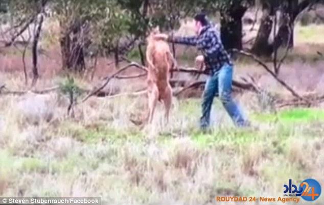 مشت مرد استرالیایی بهصورت کانگورو (فیلم و تصاویر)