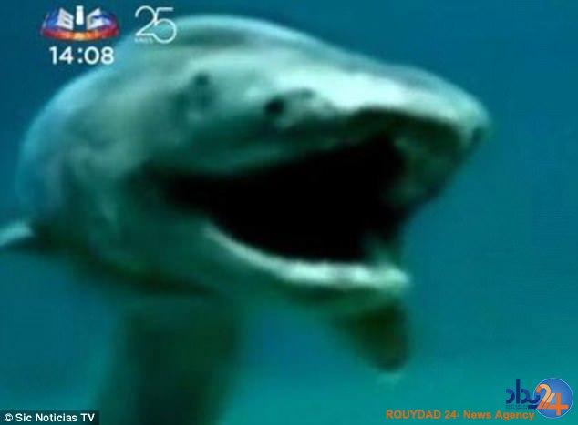 کشف کوسهای با 300 دندان در ساحل پرتغال (فیلم و تصاویر)