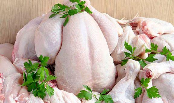 توزیع مرغ منجمد داخلی با قیمت ۱۰۵۰۰ تومان