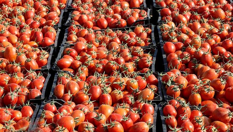 صادرات نرخ گوجه فرنگی را بالا برد/ احتکار خانگی باعث کمبود اقلام شد/مردم کشورهای دیگر در مرز ایران کالا می خرند