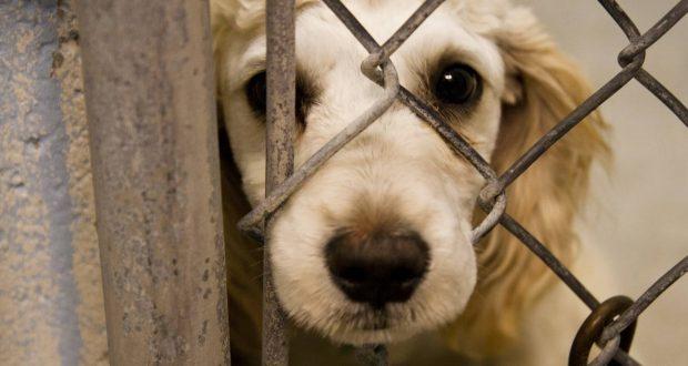 مجازات حیوانآزاری تشدید میشود