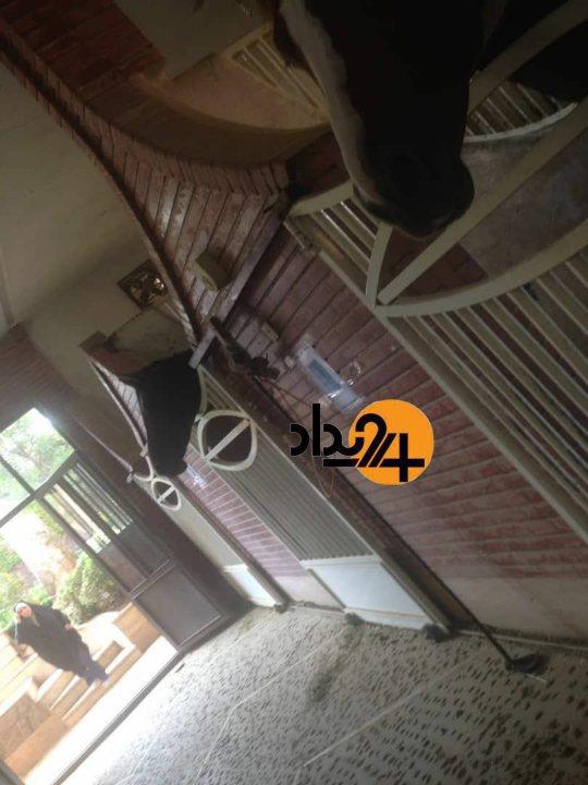 از حمام اختصاصی برای توله سگها تا پسته مخصوص برای طوطی/ تصاویر و فیلمهای اختصاصی از باغ حسن رعیت