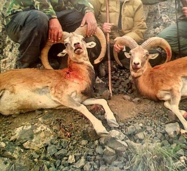 415004 652 - بازگشت به دوران شکارگاههای سلطنتی با فرمان عیسی کلانتری/ پول بدهید حیوانات را بکشید