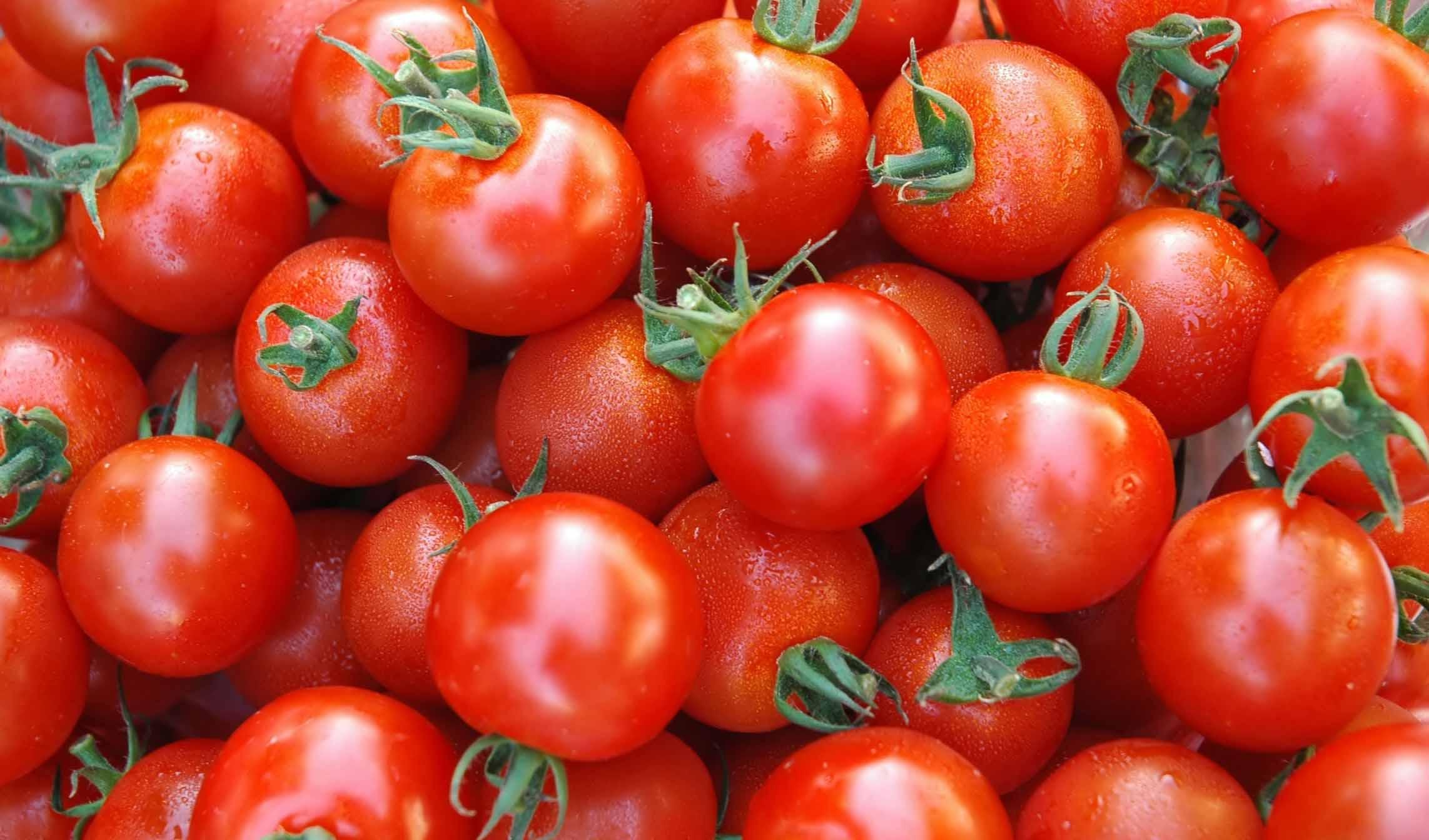 ماجرای گوجه فرنگی های برگشت خورده از عراق چیست؟