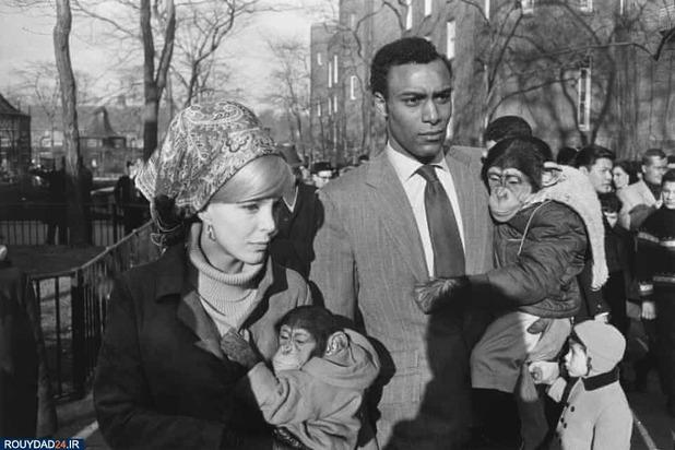 باغوحش پارک مرکزی نیویورک سال 1967, عکاس اثر کری وینوگرند