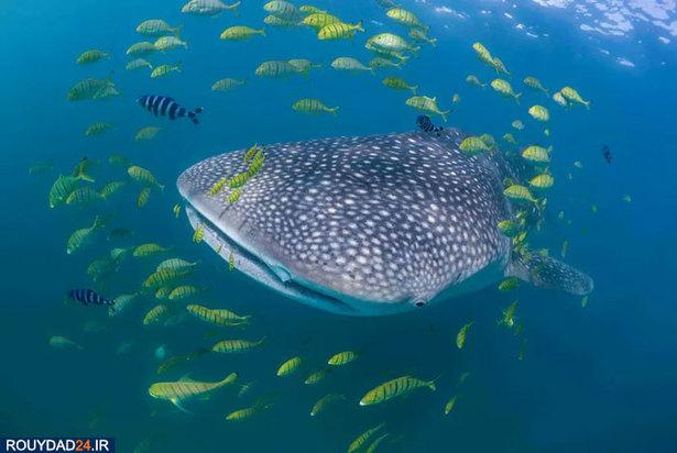 دنیای شگفت انگیز ماهیان